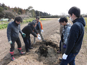 四日市市サトイモ畑見学・調査(2)