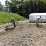 つくった実験区画に肥料をいれて良く耕します