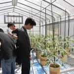 実験用ビニルハウス内の温度を測定し、トマトに水をあげます