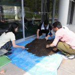 トルコギキョウの定植 (1) 充填する土を準備します
