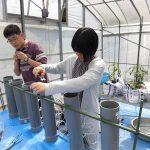 水田土壌のカラム実験 (2) 実験用カラムを実験用ビニルハウス内に設置