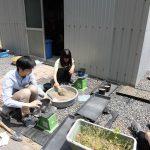 トルコギキョウの定植 (2) 決められた重さの土をポットに詰めます