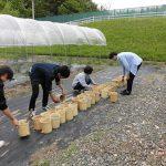 水稲の定植(2) ポットに土を充填します