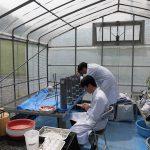 水田土壌のカラム実験 (3) それぞれの深さから土壌水を採水します