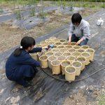 水稲の定植(4) ポットに水を張ります