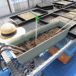 地温制御実験の準備中(1)