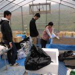 イネ栽培実験用カラム設置(1)
