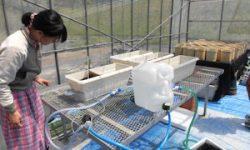 トルコギキョウ根域冷却システム作成(1)