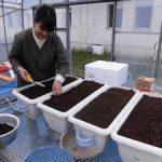 トルコギキョウ根域冷却実験開始(1)