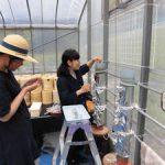 イネのカラム実験開始(2)