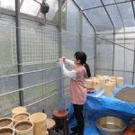 イネ栽培実験用カラム設置(3)