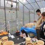 イネ栽培実験用カラム設置(4)