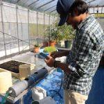 水耕栽培システム(2)